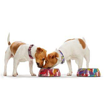 Matskål Melamin Tropical röd hundar